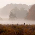 Deer Photos – Richmond Park, London, UK