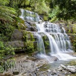 Road trip in Tasmania – Liffey Falls & Alum Cliffs