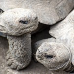 Wildlife Photography at the Galapagos Islands